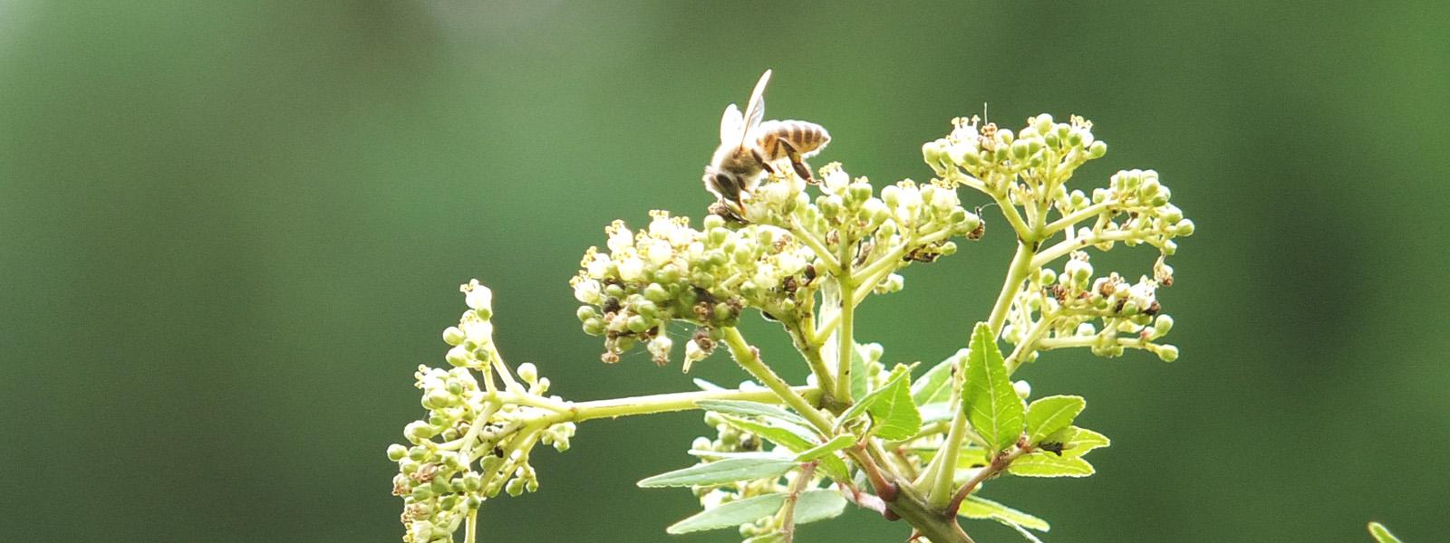 養蜂家の写真