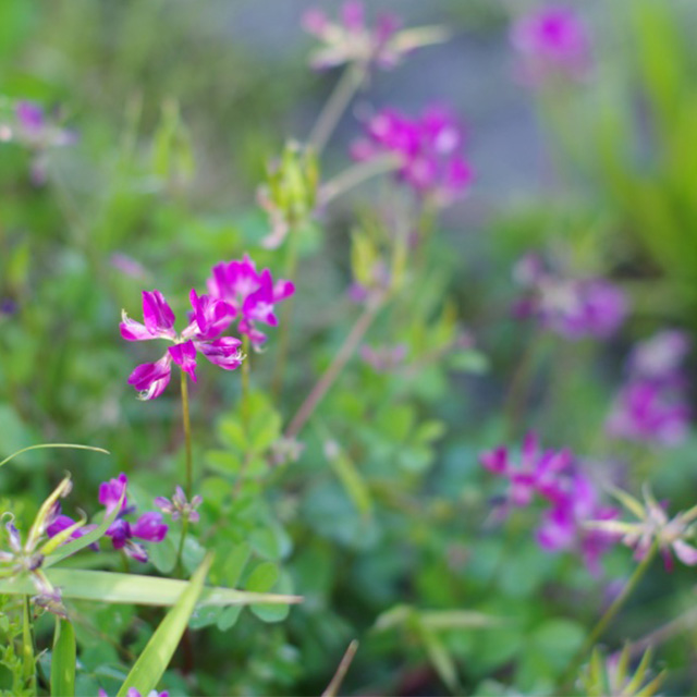 能勢町の花の写真
