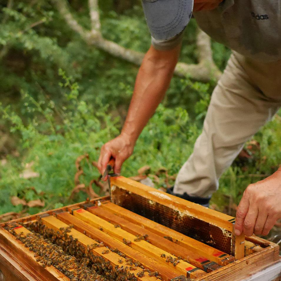 養蜂体験ワークショップ